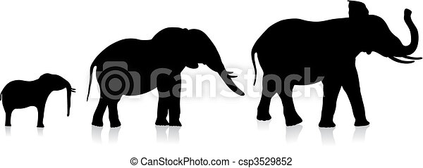 adult and infant elephants on white background - csp3529852