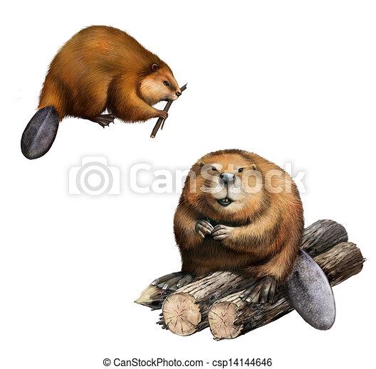 Adult Beaver sitting at logs.  Isolated Illustration on white background. - csp14144646