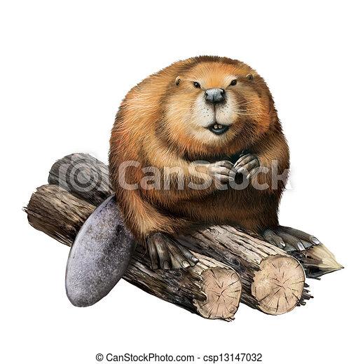 Adult Beaver sitting on logs.  - csp13147032