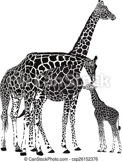 Adult giraffes and baby giraffe - csp26152376