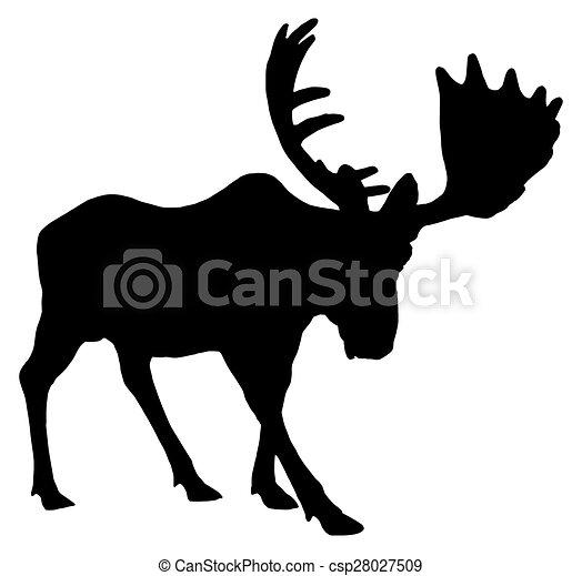 Adult moose - csp28027509