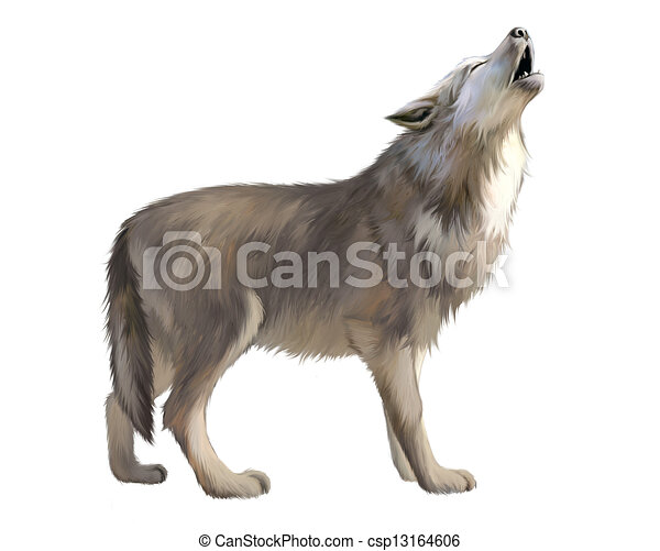 Adult Wolf howl at the moon.  - csp13164606
