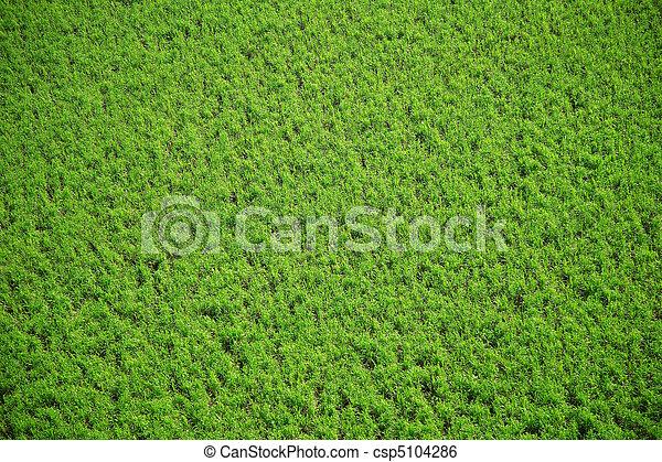 Aerial crops - csp5104286