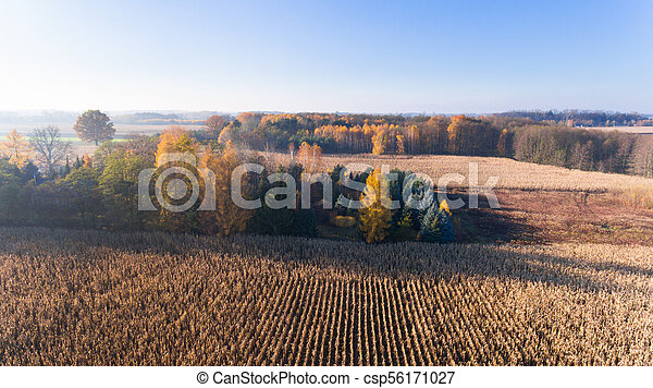 Aerial drone view from above of corn field after harvest, forest and farmland in autumn sunset - csp56171027