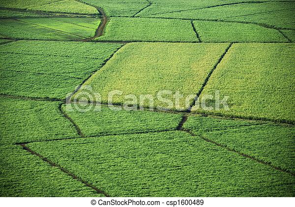 Aerial of crop fields. - csp1600489
