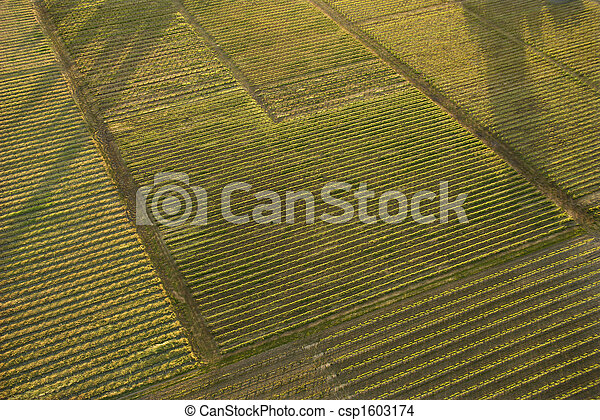 Aerial of crops. - csp1603174