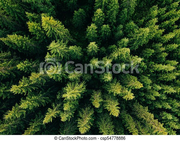 Aerial Top View Of Summer Green Trees In Forest Rural Finland