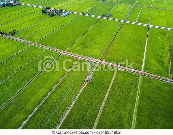 Aerial View - Green Paddy Fields - csp46354902
