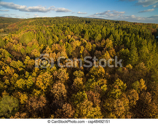 Aerial view of a forest - csp48492151