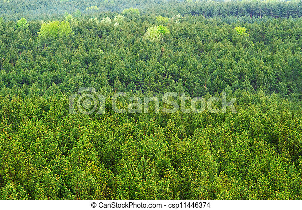 Aerial view of a green mountain forest - csp11446374