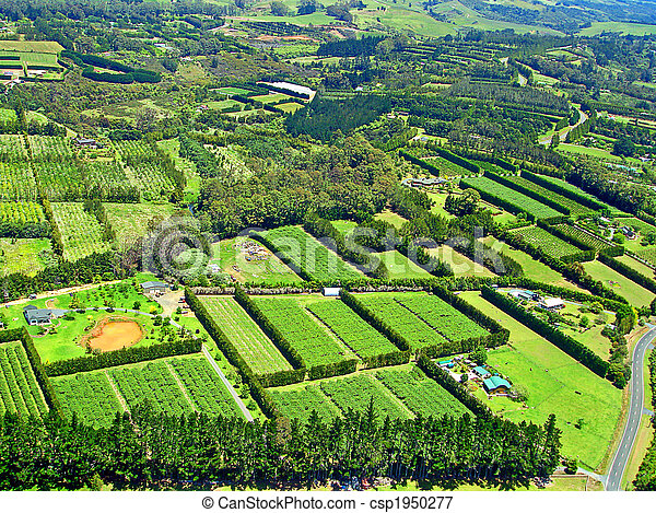 Aerial View of Agriculture near Paihia, Bay of Islands, New Zealand - csp1950277