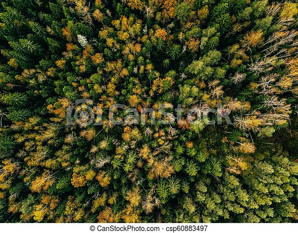 Aerial view of autumn forest. Fall landscape with red, yellow and green trees. - csp60883497