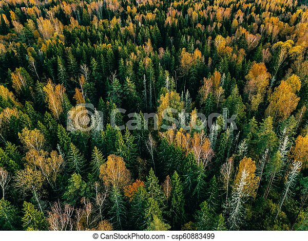Aerial view of autumn forest. Fall landscape with red, yellow and green trees. - csp60883499