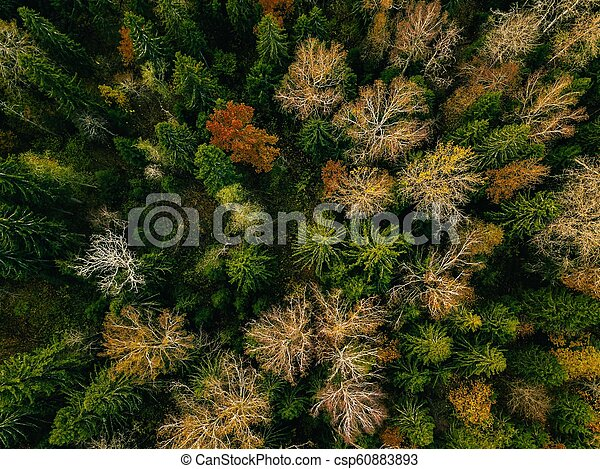 Aerial view of autumn forest. Fall landscape with red, yellow and green trees. - csp60883893