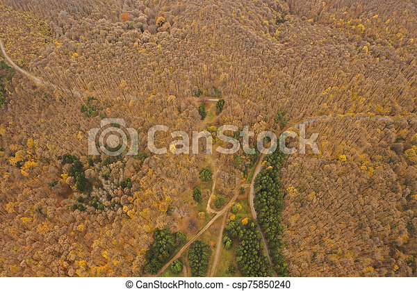 Aerial view of autumn forest road - csp75850240