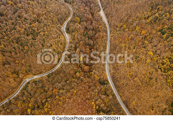 Aerial view of autumn forest road - csp75850241