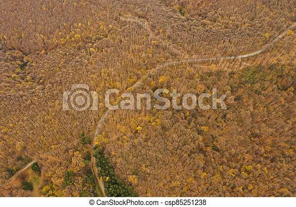 Aerial view of autumn forest road - csp85251238