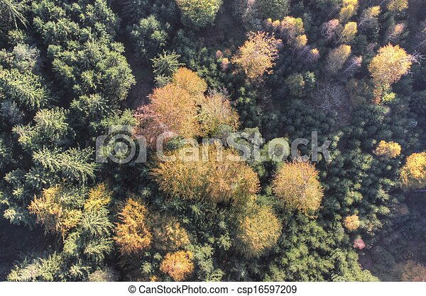 Aerial view of autumn forest - csp16597209