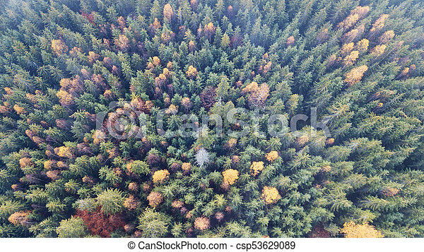 Aerial view of autumn pine forest with yellow and green trees in the mountains - csp53629089