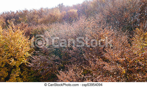Aerial view of autumn pine forest with yellow and green trees in the mountains - csp53954094