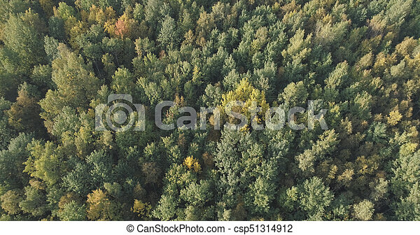 Aerial view of autumn trees in forest in september - csp51314912