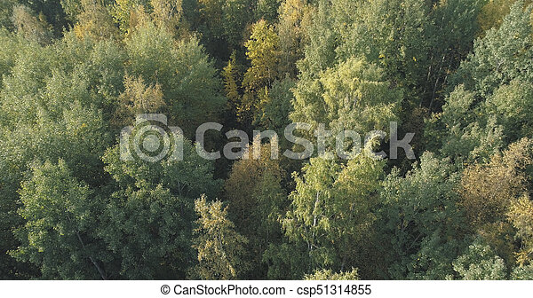 Aerial view of autumn trees in forest in september - csp51314855