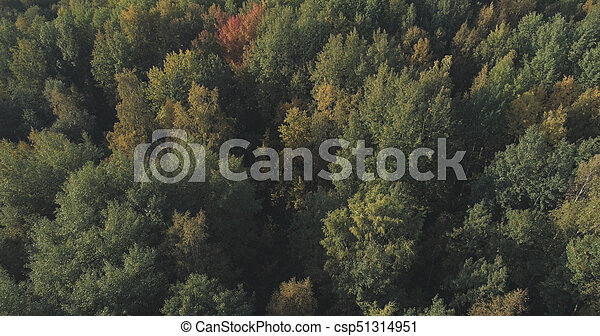 Aerial view of autumn trees in forest in september - csp51314951