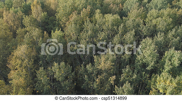 Aerial view of autumn trees in forest in september - csp51314899