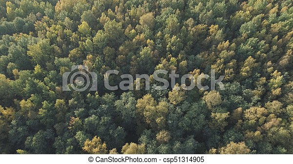 Aerial view of autumn trees in forest in september - csp51314905
