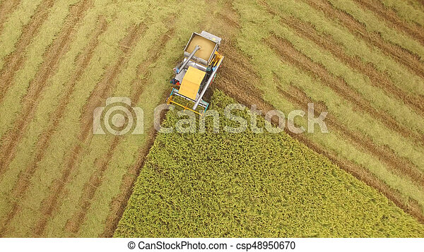 Aerial view of combine on harvest field - csp48950670