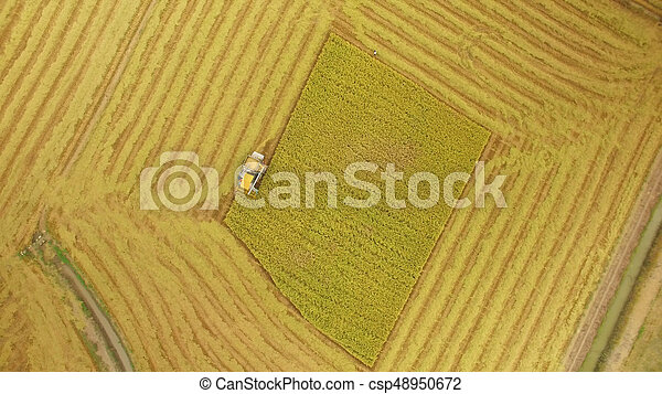 Aerial view of combine on harvest field - csp48950672