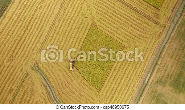 Aerial view of combine on harvest field - csp48950675