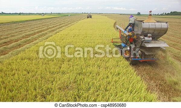 Aerial view of combine on harvest field - csp48950680