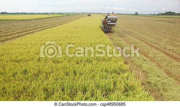 Aerial view of combine on harvest field - csp48950685