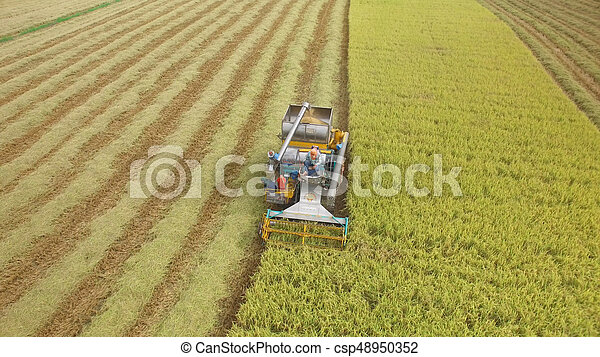 Aerial view of combine on harvest field - csp48950352