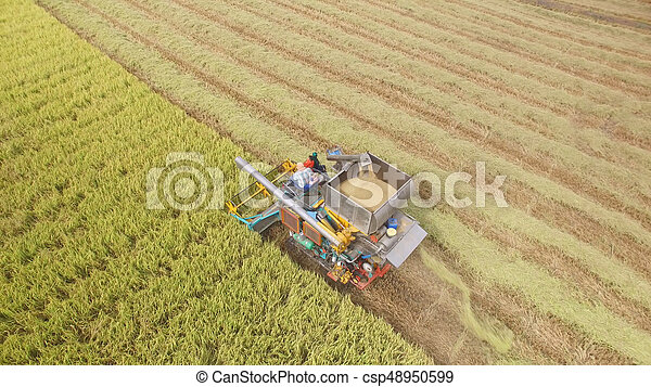 Aerial view of combine on harvest field - csp48950599