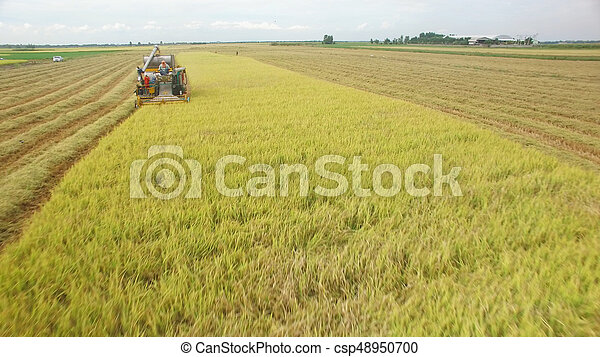 Aerial view of combine on harvest field - csp48950700