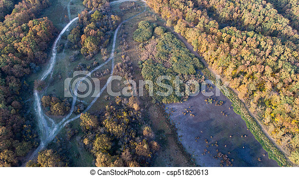 Aerial view of forest in autumn - csp51820613