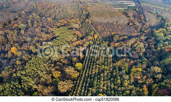 Aerial view of forest in autumn - csp51820586