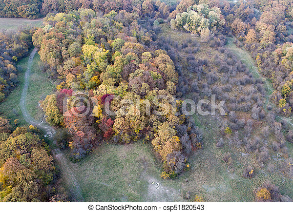Aerial view of forest in autumn - csp51820543