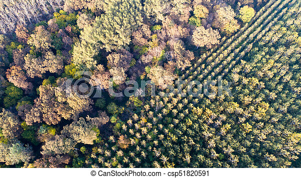 Aerial view of forest in autumn - csp51820591