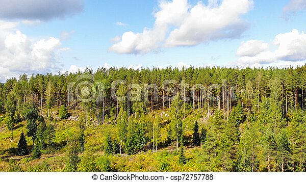 Aerial view of forest on a summer sunny day in Finland. Drone photography - csp72757788