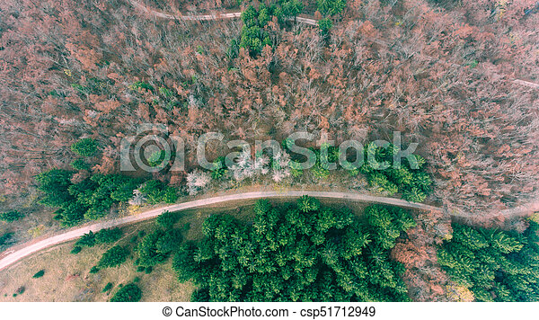 Aerial view of road through forest. - csp51712949
