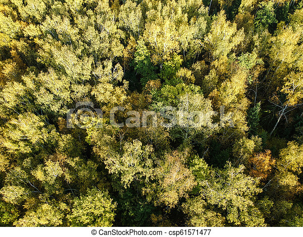Aerial view of thick forest in autumn - csp61571477