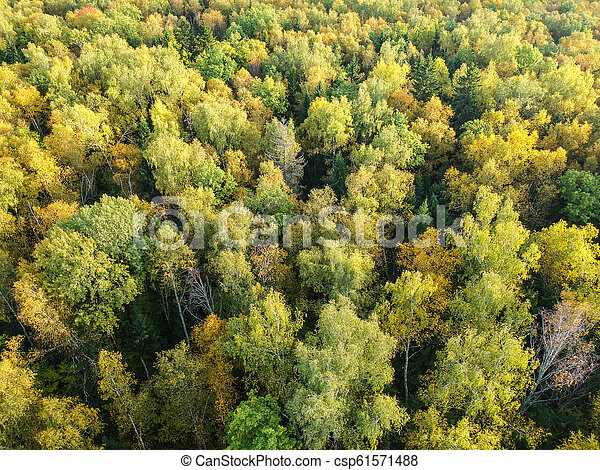 Aerial view of thick forest in autumn - csp61571488