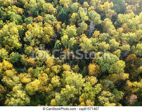 Aerial view of thick forest in autumn - csp61571467