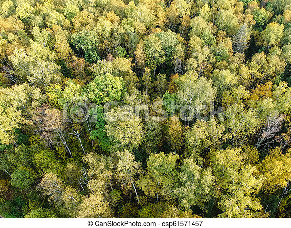 Aerial view of thick forest in autumn - csp61571457