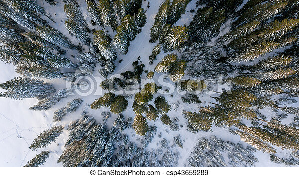 Aerial view of winter forest. - csp43659289