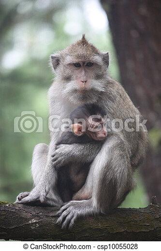 Affenmutter mit Baby - csp10055028