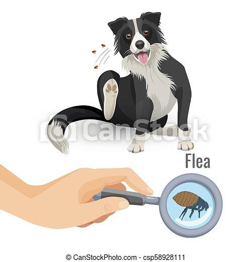 affiche, chien, illustration, puce, insecte, vecteur, grattement - csp58928111